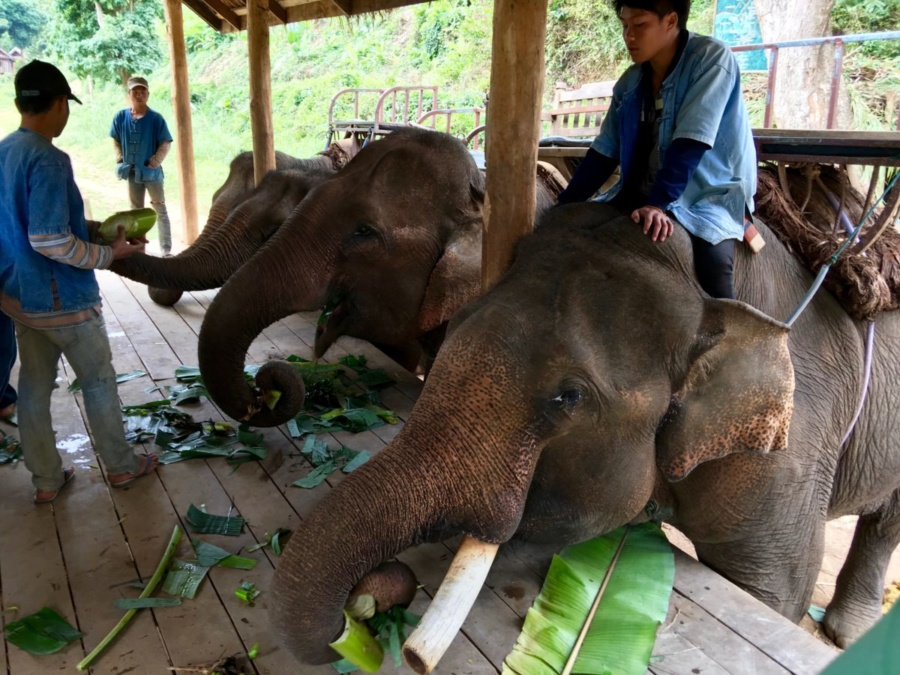 All Lao Elephant Camp
