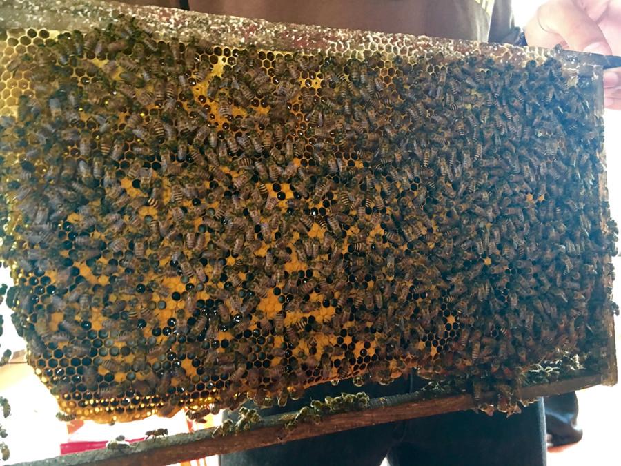 Honeycomb | Mekong River Tour